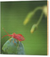 Red Bug On Green Wood Print
