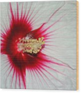 Red Burst Wood Print