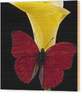 Red Butterfly And Calla Lily Wood Print