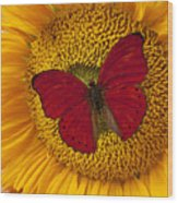Red Butterfly On Sunflower Wood Print