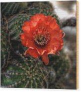 Red Cactus Flower  Wood Print