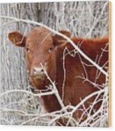 Red Calf  Hideaway Wood Print