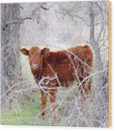 Red Calf In Winter Brush Wood Print