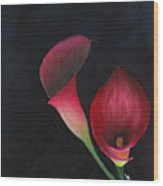 Red Calla Lillies Wood Print