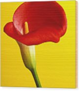 Red Calla Lilly  Wood Print