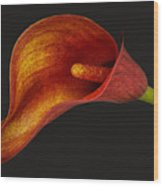 Red Calla Lily Wood Print