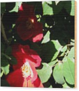 Red Camelias Wood Print