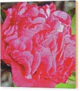 Red Camellia Wood Print