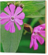 Red Campion - Fairy Flower. Wood Print
