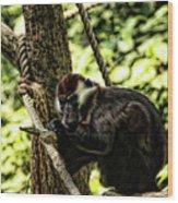 Red-capped Mangabey Wood Print