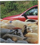 Red Car Blocked By A Flock Of Sheep Wood Print by Sami Sarkis