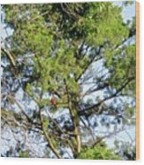 Red Cardinal In Tree Wood Print