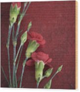 Red Carnation Stems Wood Print