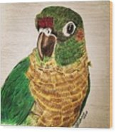 Green Cheeked Conure Wood Print