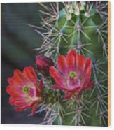 Red Claret Cup Cactus  Wood Print