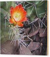 Red Claretcup Cactus Wood Print