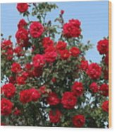 Red Climbing Roses Wood Print