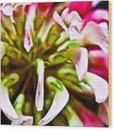 Red Clover Flower Wood Print by Ryan Kelly
