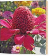 Red Cone Flower Wood Print