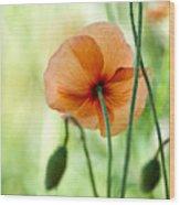 Red Corn Poppy Flowers 02 Wood Print