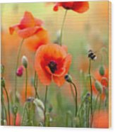 Red Corn Poppy Flowers 06 Wood Print