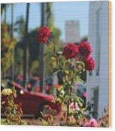 Red Coronado Roses Wood Print