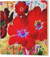 Red Cosmos Wood Print