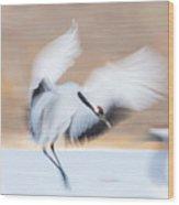 Red Crowned Crane In Kushiro Wood Print