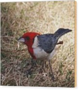 Red Crusted Cardinal Wood Print