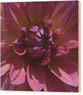 Red Dahlia Macro Wood Print
