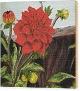 Red Dahlia Wood Print
