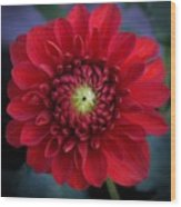 Red Dahlia Square Wood Print