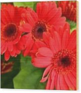 Red Daisies Wood Print