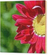 Red Daisy Wood Print