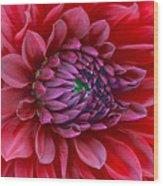 Red Dalia Up Close Wood Print