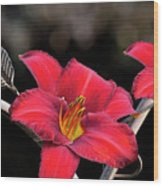 Red Day Lilies Wood Print