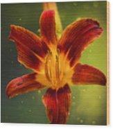 Red Daylily Wood Print