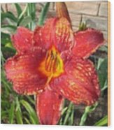 Red Daylily Wood Print