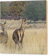 Red Deer 7 Wood Print