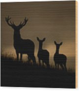 Red Deer At Dawn Wood Print