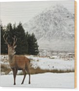 Red Deer Stag And The Buachaille Etive Mor In Winter Wood Print