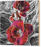 Red Double Lily Wood Print