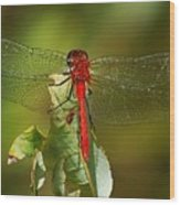 Red Dragon Fly Wood Print