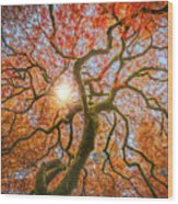Red Dragon Japanese Maple In Autumn Colors Wood Print
