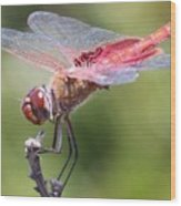Red Dragonfly 1 Wood Print