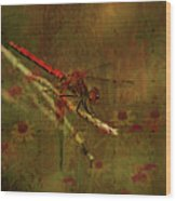 Red Dragonfly Dining Wood Print