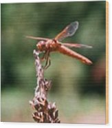 Red Dragonfly II Wood Print