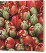 Red Elegant Blooming Tulips  Wood Print