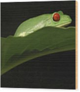Red Eye Frog Wood Print