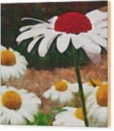 Red Eyed Daisy Wood Print